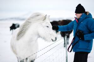 Iceland Pony And Me